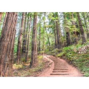 Foto tapeta - Forest Walk 1