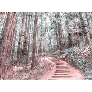 Foto tapeta - Forest Walk 2