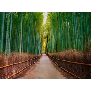 Foto tapeta - Bambus Walk