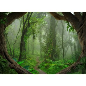 Foto tapeta - Tropical Forest