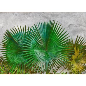 Foto tapeta - Agave Leaves