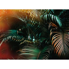 Foto tapeta - Jungle Colour