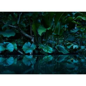 Foto tapeta - Tropical