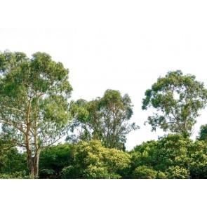 Foto tapeta - Treetop