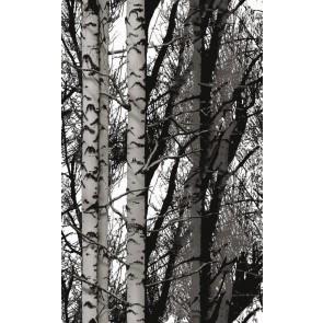 Samolepilna folija kos - Dekor Wood