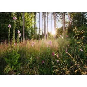 Fototapeta - Summer Glade