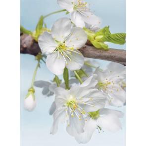Foto tapeta - Blossom