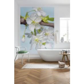 Fototapeta - Blossom